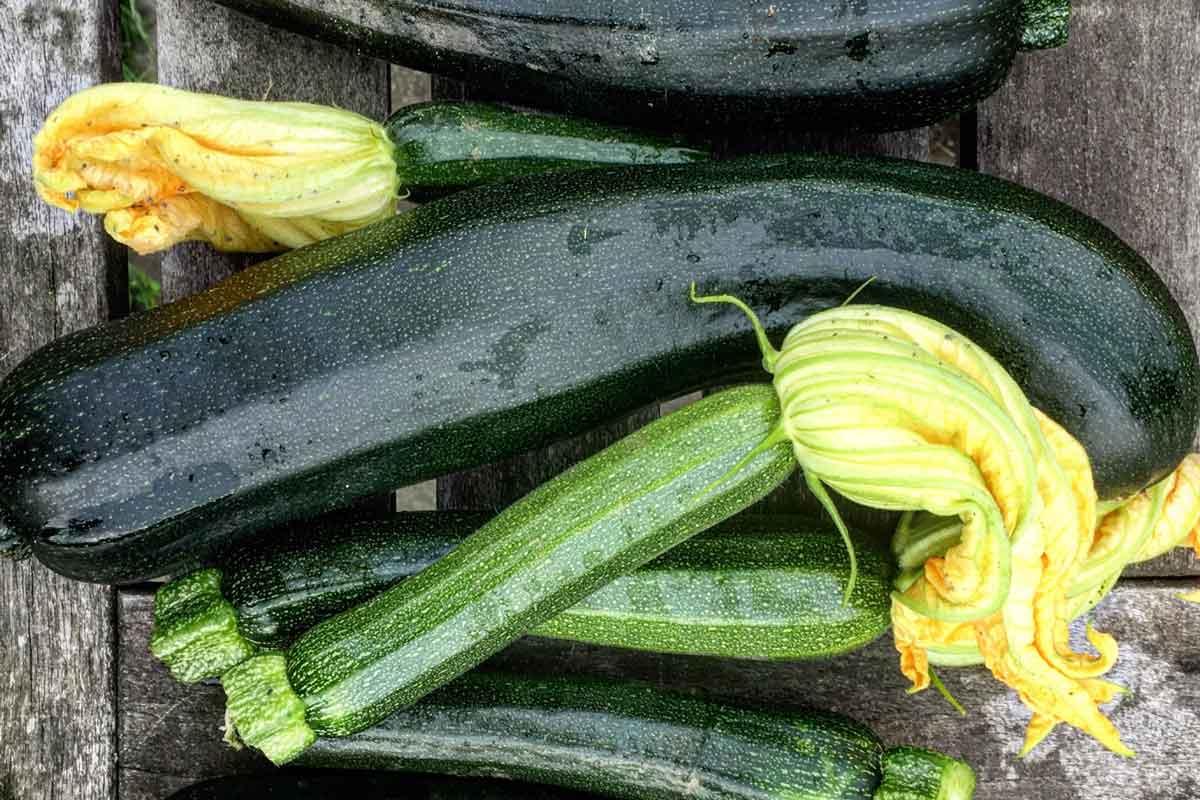courgette-groen-oogst-met-bloemen