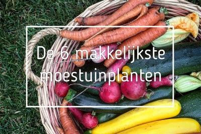 de-6-makkelijkste-moestuinplanten