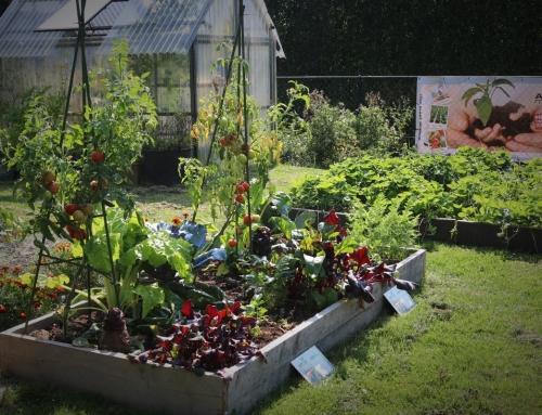 Proeftuin voor Aptus, een OERMOES project