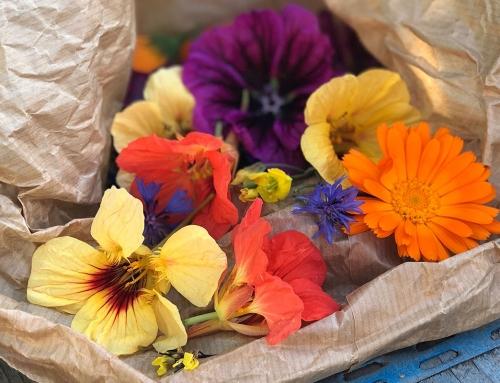 Foodtrend 2017: eetbare bloemen in alle kleuren